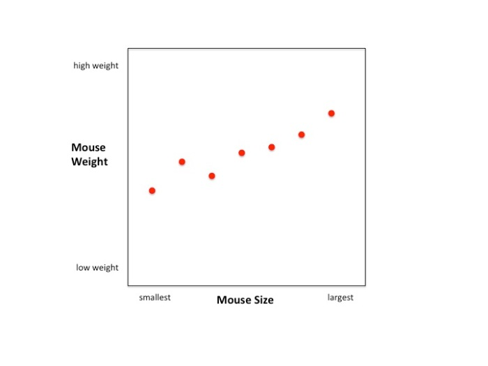 Here's the raw data for 7 mice (n=7) with mouse weight on the Y-axis and mouse size on the X-axis.